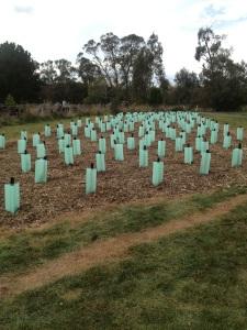 254 Trees for Mum
