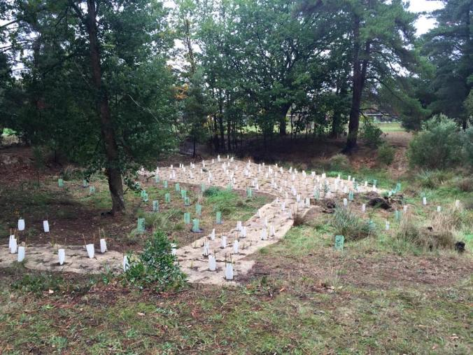 treesformumplants2016
