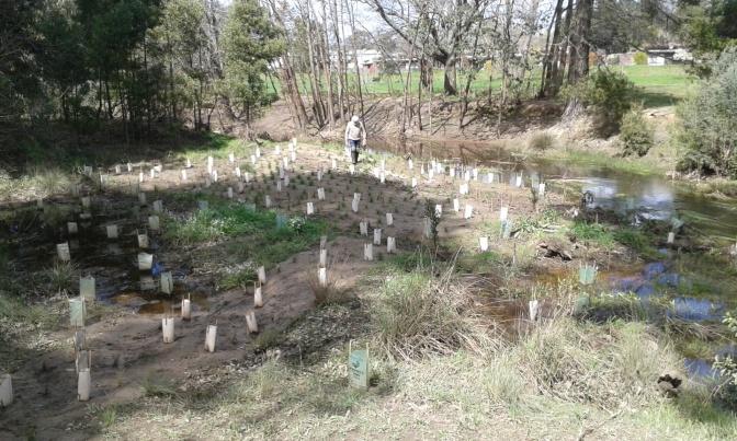 2016 Trees for Mum site
