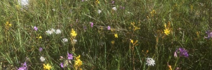 cropped-wildflowers-quarry-rd1.jpeg