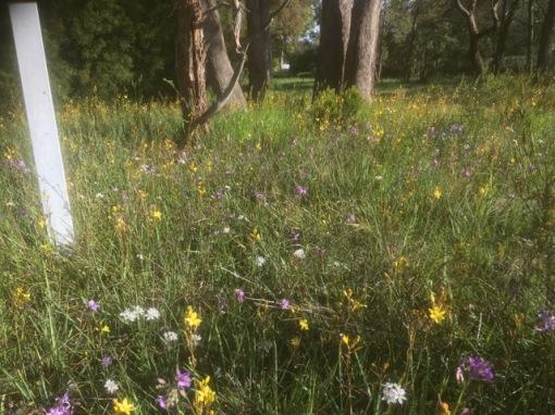 wildflowers-quarry-rd