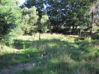 This is what the planting sites near the Children's Park looked like a year ago. Come and see how they have changed!