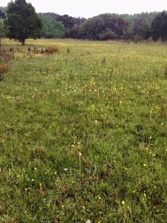 Post burn grassland