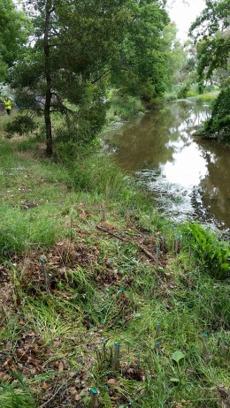 The creek banks were totally cleared by our hard working team