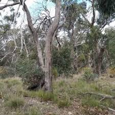 bush block