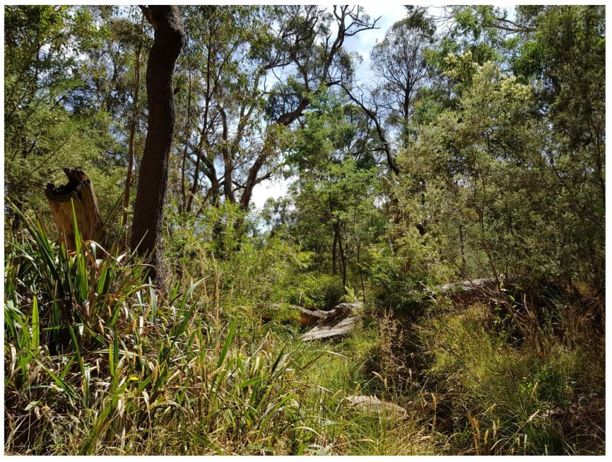 Slatey Creek
