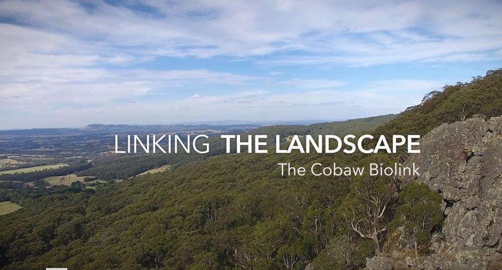 Cobaw biolink video
